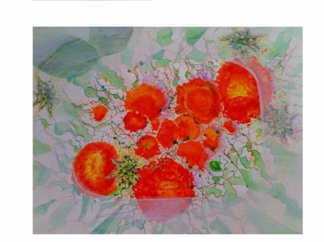 Eclosion orange