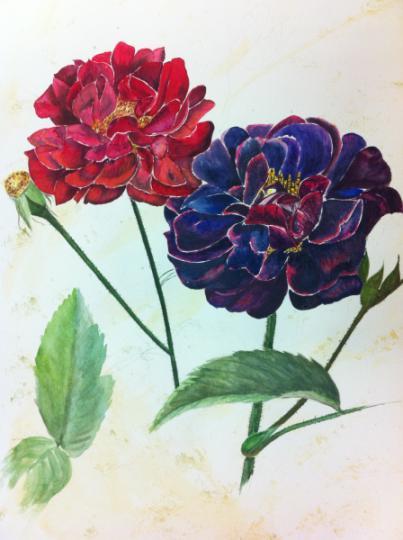 Roses d'après Redouté